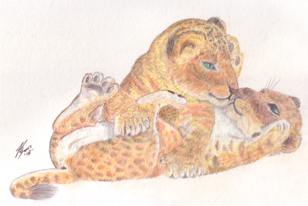 Lion Cub Drawing. of two playfull lion cubs.