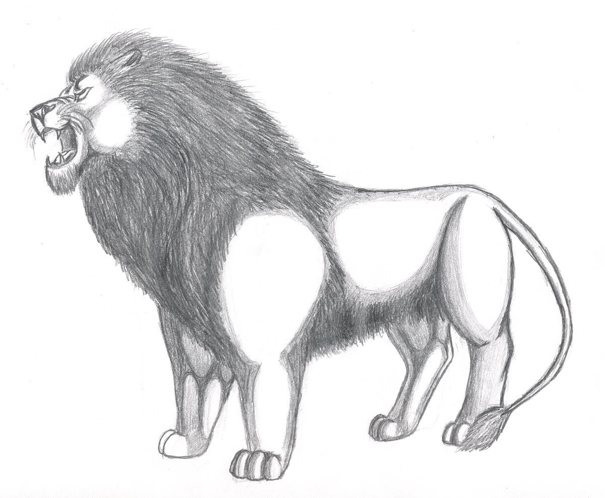 Line Art Lion : Zachariah isabel roaring lion face clipart